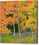 Colorado Aspens Bejeweled Canvas Print