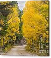 Colorado Autumn Aspen Road Boulder County Canvas Print