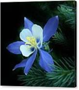 Colorado Christmas Ornament 3 Canvas Print