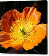 Colorado Flower Canvas Print