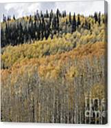Colorado Gold II Canvas Print