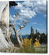 Colorado Hillside Canvas Print