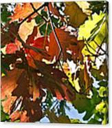 Colorado October Canvas Print