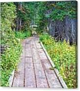 Colorado Rocky Mountain Forest Path Canvas Print