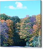 Colored Trees Canvas Print