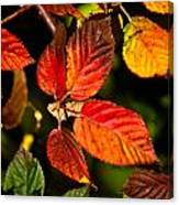 Colorful Blackberry Leaves 1 Canvas Print