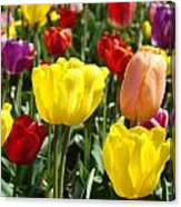 Colorful Bright Tulip Flowers Field Tulips Floral Art Prints Canvas Print