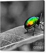 Colorful Bug Canvas Print