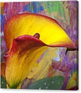 Colorful Calla Lily Canvas Print