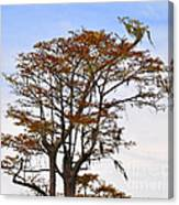 Colorful Cypress Canvas Print