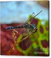 Colorful Dragon Fly Canvas Print