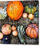Colorful Fall Harvest Canvas Print