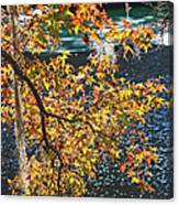 Colorful Fall Leaves Over Blue Water Canvas Print