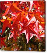 Colorful Fall Tree Red Leaves Art Prints Canvas Print