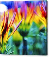 Colorful Flowers Together Canvas Print