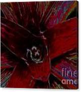 colorful Frond Canvas Print