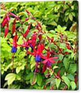 Colorful Fuchsia Canvas Print