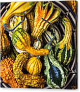 Colorful Gourds In Basket Canvas Print