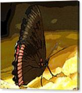 Colorful Hairstreak Canvas Print