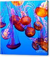 Colorful Jellies Canvas Print