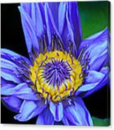 Colorful Lily Canvas Print