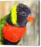 Colorful Lorikeet Parrot Canvas Print