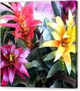 Colorful Mixed Bromeliads Canvas Print