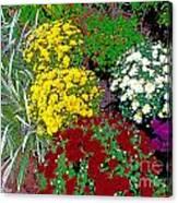 Colorful Mums Photo Art Canvas Print