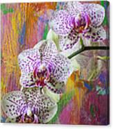 Colorful Orchids Canvas Print