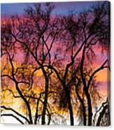Colorful Silhouetted Trees 26 Canvas Print