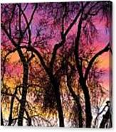 Colorful Silhouetted Trees 27 Canvas Print