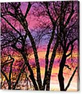 Colorful Silhouetted Trees 33 Canvas Print