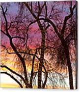 Colorful Silhouetted Trees 37 Canvas Print