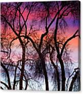 Colorful Silhouetted Trees 9 Canvas Print
