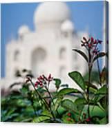 Colors Around The Taj Mahal Canvas Print
