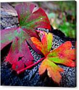 Colors Of The Autumn Forest Canvas Print