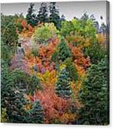 Colors Of The Sandia Forest Canvas Print