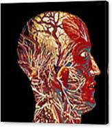 Colour Artwork Of Nerve & Blood Supply Of Head Canvas Print