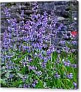 Colour Purple Canvas Print