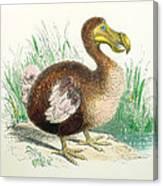 Coloured Engraving Of A Dodo Canvas Print