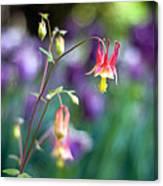 Columbine Flower Canvas Print