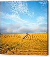 Combine Harvesting A Wheat Field Canvas Print