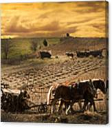 Combining And Thrashing Beans Canvas Print