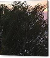 Comet Sun Canvas Print