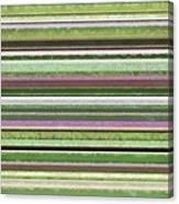 Comfortable Stripes Lv Canvas Print