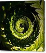 Common Polypody Swirl Canvas Print