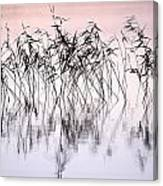 Common Reeds Canvas Print