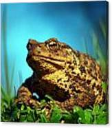 Common Toad Canvas Print