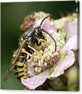 Common Wasp Feeding On A Flower Canvas Print