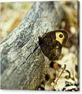 Common Wood-nymph Canvas Print